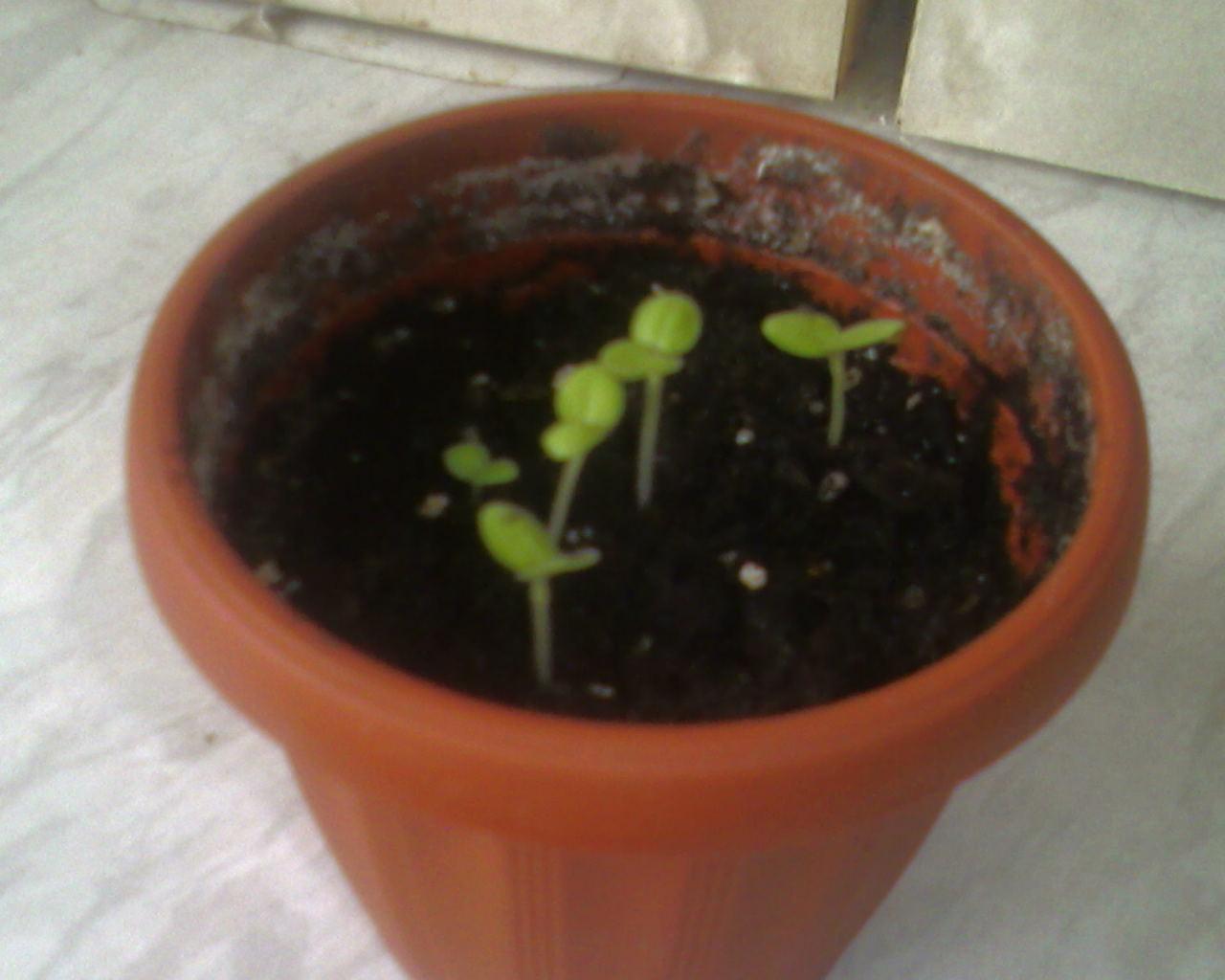 Как быстро прорастить фасоль: основные правила проращивания 51